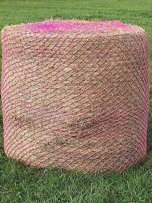 balenet-wildboar-pink