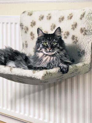 Cats-Kumfy-Kradle