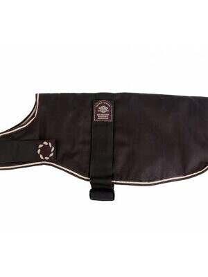 dachshund-coat-brown