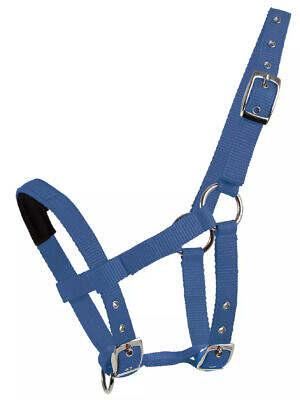 halter-for-mini-shetties-azure blue