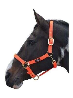 Hy-Grand-Prix-Head-Collar-orange