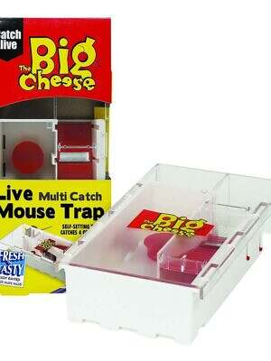 The Big Cheese Live Multi-Catch Mouse Trap Small